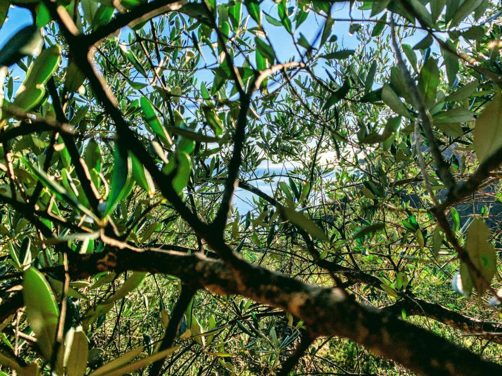 Primavera Portofino